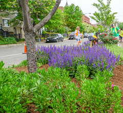 2018.05.06 Vermont Avenue, NW Garden - Work Party, Washington, DC USA 01794