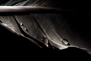 Low Key Feather and Drops I