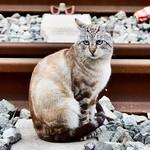 #gatos #gatoscallejeros #cats #photocats #instacats #neko #meow #gatze #gatto #koshka #catsofworld #catsofinstagram #streetcats #catsofworld #siames #siamestabbypoint #tabbypoint #animalaugh #eyelicious thumbnail