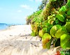 DSC_0179-1 (E Michelle O'Connor) Tags: puertorico sanjuan sandybeach tropicalplants beachplants oceanwaves islandvacation islandlife landscape mothernature oceanscape puertoricobeach travelphotography