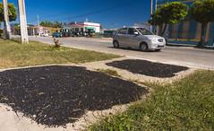 Camajuani - 1 - City Center - Sun drying black beans (lezumbalaberenjena) Tags: camajuani camajuaní villas villa clara cuba cuban ciudad city 2018 lezumbalaberenjena centro center