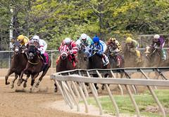 2018 Best Pimlico Racetrack (6) (maskirovka77) Tags: pimlico dirt mare race racehorse threeyearold turf yearling