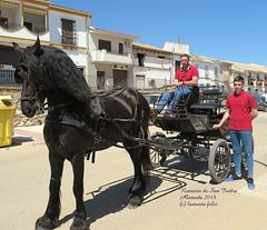 Alameda-Romería de San Isidro. (lameato feliz) Tags: alameda romería fiesta caballo cochedecaballos gente