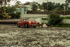 Dogs 356 (fabioffcarvalho) Tags: toys shooterspt felling olhoportugues tripeportugues bomresgito portugal aminhavisao portugalemclicks canon brinquedo toy photography miniaturas jardim road hills homemade phorsche car carro 356 brinquedos street mini