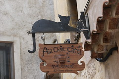 Chat Casti (CHRISTOPHE CHAMPAGNE) Tags: 2018 grasse france 06 alpes maritimes chat casti