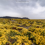 Primavera en El Cabo thumbnail