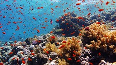 in the fishbowl (werner boehm *) Tags: wernerboehm scubadiving redsea egypt sinai
