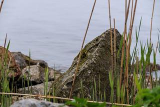 Boulders on the dike