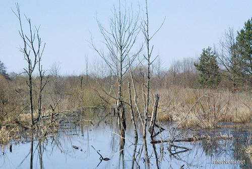 Волинське болото InterNetri Ukraine 07