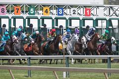 2018 Pimlico Race track (40) (maskirovka77) Tags: pimlico dirt mare race racehorse threeyearold turf yearling