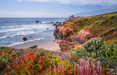 Big Sur Spring Wildflowers California Superbloom Scenery! Elliot McGucken Fine Art Landscape & Nature Photography! High Res Scenic Wild Flowers View! Sony A7RII & Carl Zeiss Sony Vario-Tessar T* FE 16-35mm f4 ZA OSS Lens! Cloudy Spring Super Bloom Vista! (45SURF Hero's Odyssey Mythology Landscapes & Godde) Tags: big sur spring wildflowers california superbloom scenery elliot mcgucken fine art landscape nature photography high res scenic wild flowers view sony a7rii carl zeiss variotessar t fe 1635mm f4 za oss lens cloudy super bloom vista