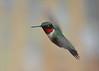 Ruby-throated Hummingbird (av8s) Tags: rubythroatedhummingbird hummingbird birds nature wildlife pennsylvania pa photography nikon d7100 sigma 120400mm