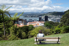 Bench - Wellington (Neil Pulling) Tags: wellington nz newzealand bench