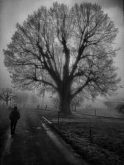 Kälte (pgbern) Tags: ©sahlistefan original