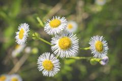 Flower III (Alexander Day) Tags: flower flowers duke farms new jersey alex alexander day nikon d3300 nature flora