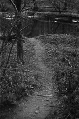 Path (m.ashe7) Tags: nikon nikonf nikkor gunpowderfalls gunpowderfallsstatepark outdoors river park statepark maryland blackandwhite tmax400 d76 film kodak