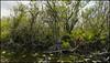 _SG_2018_04_0060_IMG_6715 (_SG_) Tags: usa us florida key west sunshine state united states america island city roundtrip everglades national park american alligator mile nine pond
