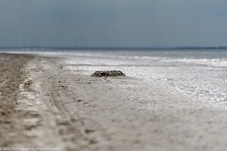 Nordseestrand aufgenommen auf Spiekeroog - North sea beach photographed on Spiekeroog