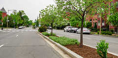 2018.05.06 Vermont Avenue, NW Garden - Work Party, Washington, DC USA 01905