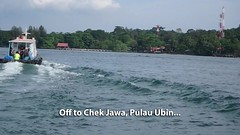 Chek Jawa boardwalk tour with the Naked Hermit Crabs (wildsingapore) Tags: chekjawa pulau ubin cnidaria jellyfish scyphozoa acromitus island singapore marine coastal intertidal shore seashore marinelife nature wildlife underwater wildsingapore people guiding