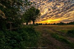 sundown (fotos_by_toddi) Tags: niederrhein nrw fotosbytoddi voerde wolken wolke clouds cloudy sonne strahlen wiesen wiese sony sonya7 sonyalpha7 sky sonnenuntergang sun alpha a7 alpha7 tier gras himmel baum feld sonnenstern landschaft
