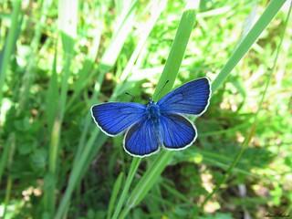 Butterfly 1668
