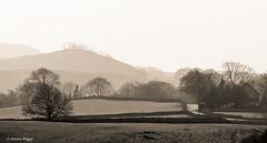 Grassington, North Yorkshire. (I'mDKB) Tags: grassington skipton northyorkshire england nikond80 70300mm 70300mmf4556g imdkb yorkshiredales dales sepia monochrome toning trees landscape mist grass sky fields