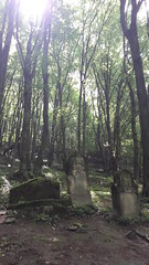 Jewish Cemetery in Kazimierz Dolny, Poland. (Team Ravenpuff) Tags: nature spring history poland cemetery tree