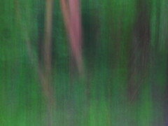 Deep in the Woods (alanrharris53) Tags: shepshedcameraclub walk photowalk icm intentionalcameramovement woods swithland trees