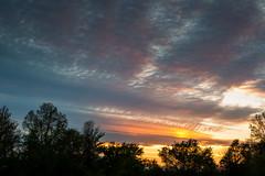 Spring Sunset Sky Texture (matthewkaz) Tags: sky sunset clouds trees silhouette sun rays roselakestategamearea stategamearea clintoncounty spring pattern texture patterns 2017 obscuredbyclouds