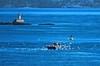 Recyclers Invasion - Invasión de Recicladores (Konny :-))) Tags: fishingboat fischerboot bateaudepêche peschereccio barcopesquero pesqueiro möven gaivotas gulls gabbiani lighthouse leuchtturm faro farol krabbenfisher pescadordecaranguejo crabfisher krabbefiskeren