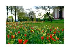 Im Park (Fujigraf) Tags: frühling sommer herbst winter jahreszeiten tulpen garten baum tempel blüte farbe color wiese fuji xt20 xf56mm