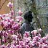Magnolias With Lincoln (edenpictures) Tags: magnolia unionsquarepark newyorkcity nyc manhattan spring flowers