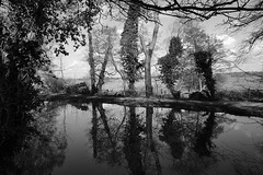Nature's Word (JamieHaugh) Tags: rufford liverpool england uk gb greatbritain sony a6000 outdoors walk serenity canal water trees grass peace quiet calm reflections nature lancashire leeds sky blackandwhite blackwhite monochrome bw words ilce6000 zeiss