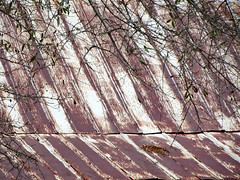 Cabin Roof. (dccradio) Tags: whiteoak nc northcarolina bladencounty outside outdoors harmonyhall harmonyhallplantation park museum history historic historical livinghistory cabin house building architecture old antique vintage classic roof tree trees greenery foliage branches treebranch treebranches treelimb treelimbs