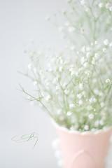Delicate (JMS2) Tags: flowers closeup vase pale babysbreath freshflowers