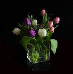 Just Tulips (Smiffy'37) Tags: tulips flowers colours nature stilllife blackbackground