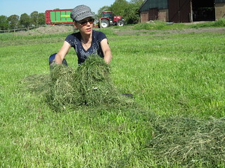2018, Harvest silage grass today
