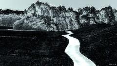 The way - Der Weg (b_kohnert) Tags: blackandwhite schwarzweis monochrome einfarbig landscape way
