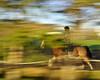 Raynham Stables, Nobleton, May 2018 (Richard Wintle) Tags: raynhamstables equestrian horse horseback eventing dressage motionblur blur foliage slowshutter nobleton schomberg king kingtownship ontario canada