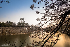 Osaka Castle (Juan C. Sánchez Photography) Tags: japan osaka osakacastle castillodeosaka osakacastlepark park river japon nippon asia island longexposure nisi nisifilters bigstopper ndfilters history traveler travel vacations sony sonya6500 sonyalpha a6500 12mm rokinon12mm samyang12mm landscapes landscape paisaje rio castillo parc parque historia friends naturaleza natural nature naturallight allnaturesparadise paradise beautiful amusement pretty awesome cherryblosom sakura spring