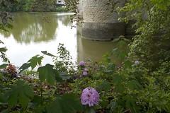 DSCN7103 (Rumskedi) Tags: flore europa château城 belgique belgië belgien europe欧洲 monde世界 steenokkerzeel azalée