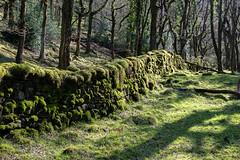 Mossy Wall (jonshort58) Tags: fatherford okehampton dartmoor devon sunlit moss wall granite green spring 2018 nikond7500 nikkor1685