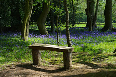 Coton Manor Garden, Northampton (Blue Sky Pix) Tags: bluebell woods cotonmanorgardens northamptonshire beautiful perfume scent admire bench rest may 2018 england pentax