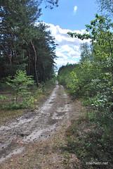 Волинський ліс Лісова дорога InterNetri Ukraine 1508776169