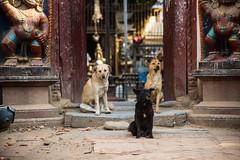 Temple guardians (rfabregat) Tags: nepal nepalese asia travel travelphotography bhaktapur kathmandu patan kathmanduvalley nikon nikond750 d750