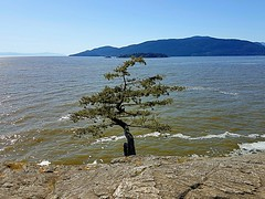 A rock, a tree and the sea (walneylad) Tags: lighthousepark pointatkinson westvancouver britishcolumbia canada park parkland woods woodland forest rainforest urbanforest tree trees rock rocks water sea ocean pacificocean howesound bowenisland may spring sun bluesky waves beautiful seascape landscape view scenery nature
