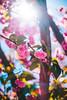 ILCE-7M2-09510-20180512-1245 // Nikon Nikkor-SC Auto 55mm 1:1.2 (Otattemita) Tags: 55mmf12 florafauna nikonaid nikonnikkorscauto55mmf12 nikonnonai nikonpreai nipponkogaku fauna flora flower nature plant wildlife nikonnikkorscauto55mm112 sony sonyilce7m2 ilce7m2 55mm cnaturalbnatural ota