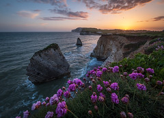 Wild Sea Thrift, Freshwater Bay, Isle of Wight. (Elm Studio) Tags: copyright copyrighted jeffmorgan elmstudio jeffelmstudiocom wwwelmstudiocom 4407542933700 isleofwight uk 2018 bay beach bright chalk cliff colourful freshwater freshwaterbay gb idyllic landscape outdoors placeofinterest sea seastacks seascape seaside sky thrift waves wildthrift yacht sunset armeriamaritima plumbaginaceae seapink appicoftheweek microfourthirdsgallery morgan europe contrejour mft mirrorless panasonic wideangle grass sunny england gbr