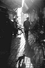 Streets of Istanbul (Aicbon) Tags: verde istanbul estambul cat kedi gato streetcat street calle bw bn monocromo monochrome blancoynegro blackandwhite carrer ciudad city animal people persona bokeh canon 6d turquía türkiye turkey